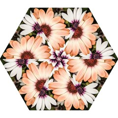 Beautiful Colourful African Daisies Mini Folding Umbrellas