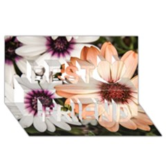 Beautiful Colourful African Daisies Best Friends 3d Greeting Card (8x4)