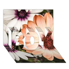 Beautiful Colourful African Daisies BOY 3D Greeting Card (7x5)