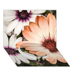 Beautiful Colourful African Daisies Circle Bottom 3D Greeting Card (7x5)