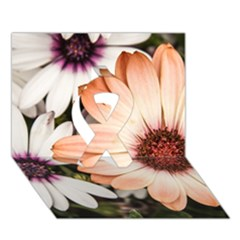 Beautiful Colourful African Daisies Ribbon 3D Greeting Card (7x5)