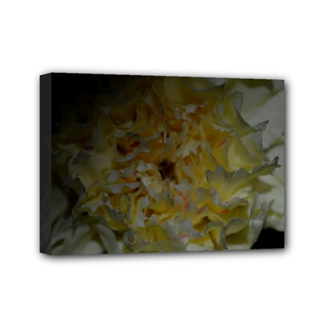 Yellow Flower Mini Canvas 7  x 5