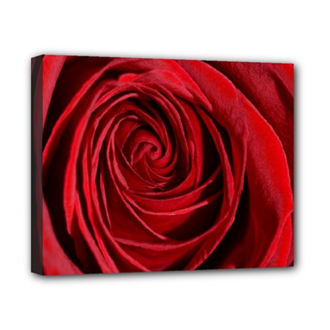 Beautifully Red Canvas 10  x 8