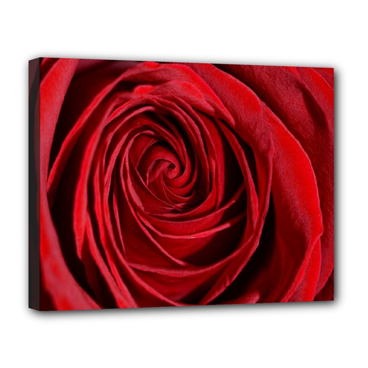 Beautifully Red Canvas 14  x 11