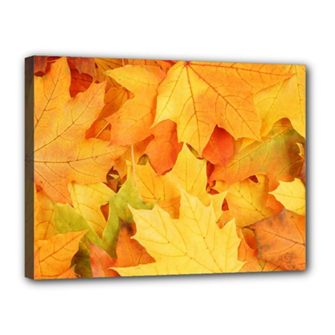 YELLOW MAPLE LEAVES Canvas 16  x 12