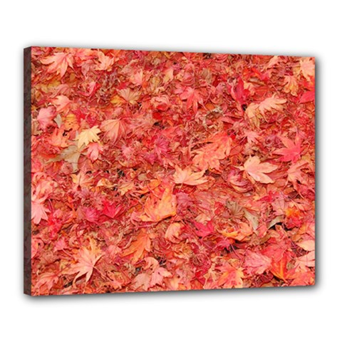 RED MAPLE LEAVES Canvas 20  x 16