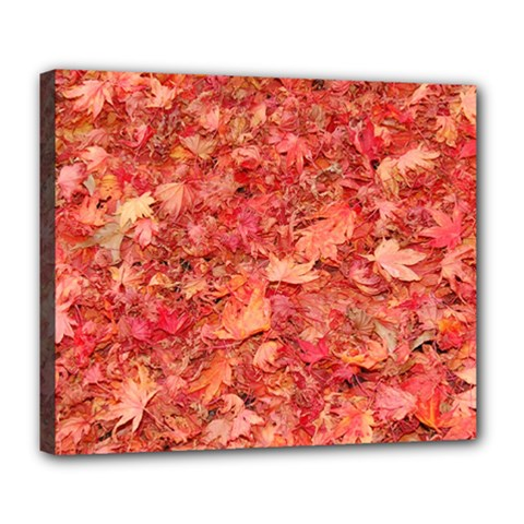 RED MAPLE LEAVES Deluxe Canvas 24  x 20