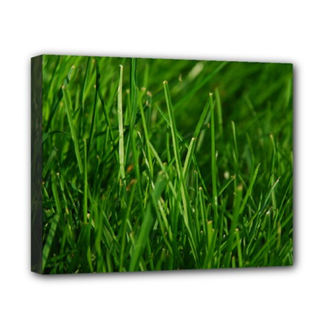 GREEN GRASS 1 Canvas 10  x 8