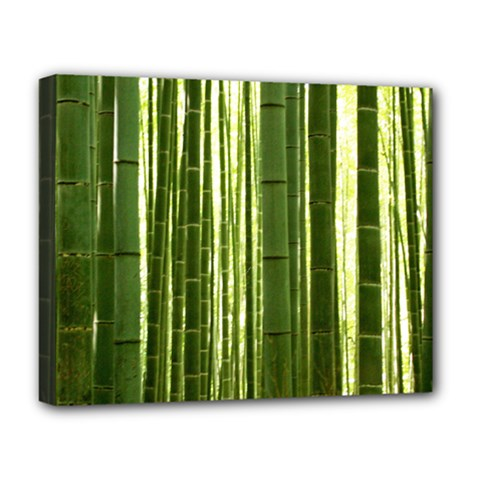 BAMBOO GROVE 2 Deluxe Canvas 20  x 16