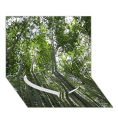 BAMBOO GROVE 1 Heart Bottom 3D Greeting Card (7x5)