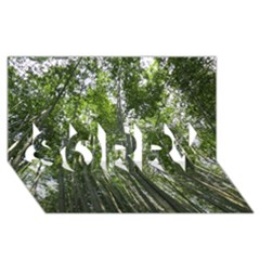 Bamboo Grove 1 Sorry 3d Greeting Card (8x4)