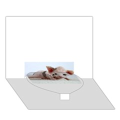 Sphynx Kitten Heart Bottom 3D Greeting Card (7x5)