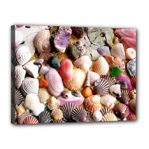 COLORFUL SEA SHELLS Canvas 16  x 12