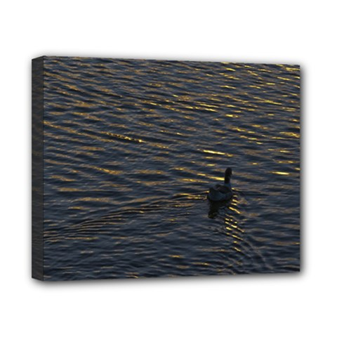 Lonely Duck Swimming At Lake At Sunset Time Canvas 10  x 8