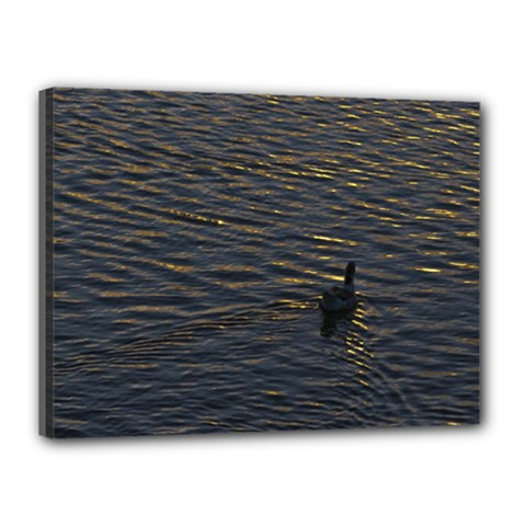 Lonely Duck Swimming At Lake At Sunset Time Canvas 16  X 12