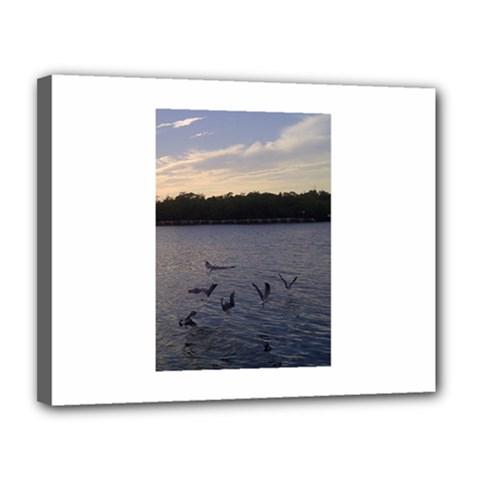 Intercoastal Seagulls 3 Canvas 14  X 11