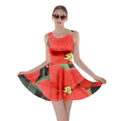 POINSETTIA Skater Dresses