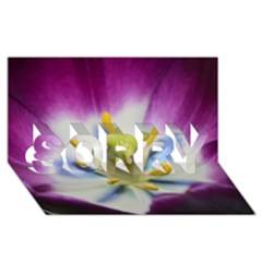 Purple Beauty SORRY 3D Greeting Card (8x4)