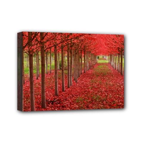 AVENUE OF TREES Mini Canvas 7  x 5