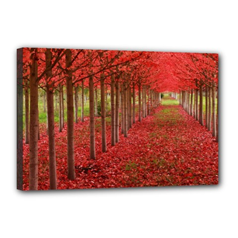 AVENUE OF TREES Canvas 18  x 12