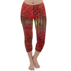 AVENUE OF TREES Capri Winter Leggings