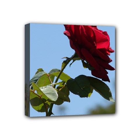 RED ROSE 2 Mini Canvas 4  x 4