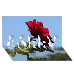 RED ROSE 2 SORRY 3D Greeting Card (8x4)