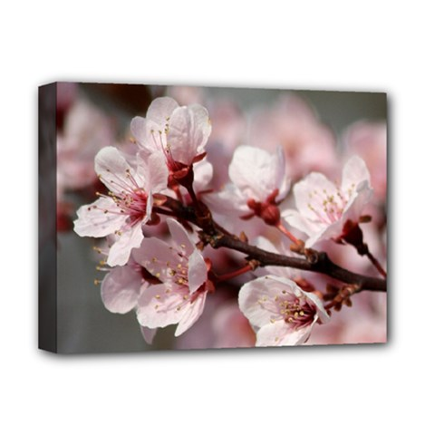 PLUM BLOSSOMS Deluxe Canvas 16  x 12
