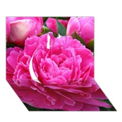 PAEONIA ELEANOR Apple 3D Greeting Card (7x5)