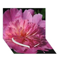 Paeonia Coral Heart Bottom 3d Greeting Card (7x5)