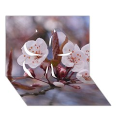 Cherry Blossoms Clover 3d Greeting Card (7x5)