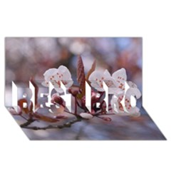 CHERRY BLOSSOMS BEST BRO 3D Greeting Card (8x4)
