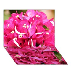 BOUGAINVILLEA Clover 3D Greeting Card (7x5)