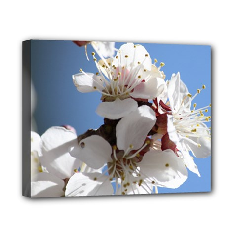 APRICOT BLOSSOMS Canvas 10  x 8