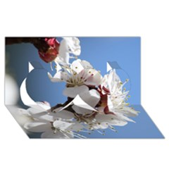 APRICOT BLOSSOMS Twin Hearts 3D Greeting Card (8x4)