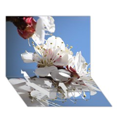 Apricot Blossoms Love Bottom 3d Greeting Card (7x5)