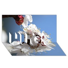 APRICOT BLOSSOMS HUGS 3D Greeting Card (8x4)