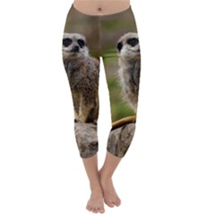 MEERKAT Capri Winter Leggings