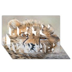 Leopard Laying Down Best Wish 3d Greeting Card (8x4)