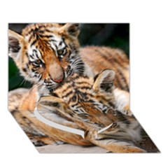 Baby Tigers Heart Bottom 3d Greeting Card (7x5)