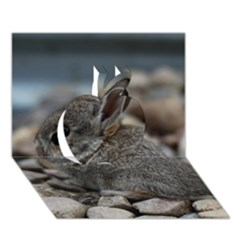 Small Baby Bunny Apple 3d Greeting Card (7x5)