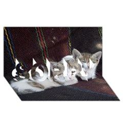 Kitty Twins Sorry 3d Greeting Card (8x4)