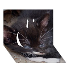 Kitty In A Corner Apple 3d Greeting Card (7x5)