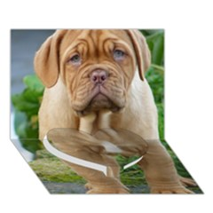 Cute Wrinkly Puppy Heart Bottom 3d Greeting Card (7x5)