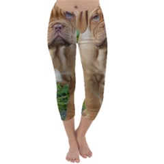 Cute Wrinkly Puppy Capri Winter Leggings