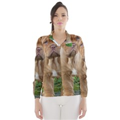 CUTE WRINKLY PUPPY Wind Breaker (Women)