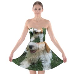 Cute Cavapoo Puppy Strapless Bra Top Dress