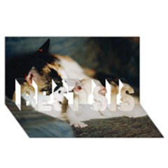 Calico Cat And White Kitty Best Sis 3d Greeting Card (8x4)