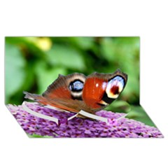 Peacock Butterfly Twin Heart Bottom 3d Greeting Card (8x4)