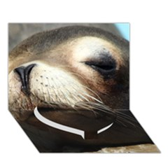 Cute Sea Lion Heart Bottom 3d Greeting Card (7x5)